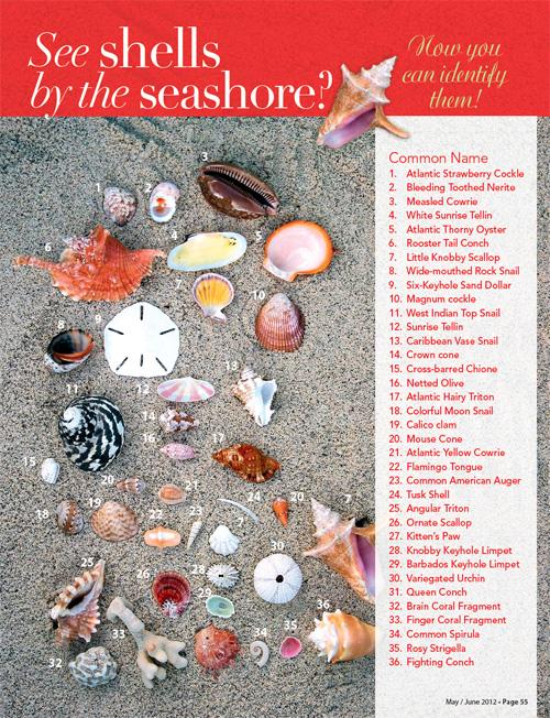 sea-shell-guide